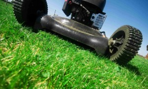Wilkes Barre Lawn Care