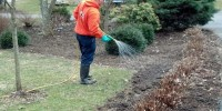 Louis Mulch Bed Weed Control 8