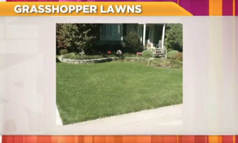 grasshopper-lawns